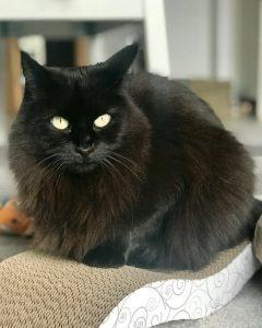 mobilen Katzenbetreuung - Meine Tiere